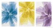 Three X-Ray Flowers