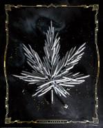 Carpe Cannabis