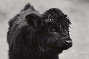 Scottish Highland Cattle XI BW