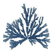 Pacific Sea Mosses Blue on White IV