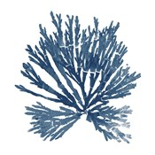 Pacific Sea Mosses Blue on White II