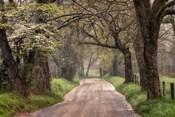Nature Trail Walks