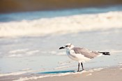 See the Seagull