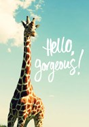 Hello Gorgeous Giraffe