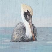 Pelican Wash II