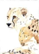 Seated Cheetah