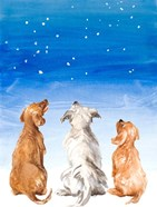 Three Dogs Star Gazing