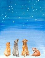 Four Dogs Star Gazing