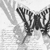 Butterflies Studies II