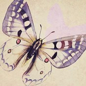 Lavender Butterfly on Cream