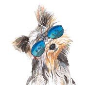 Yorkie with Shades