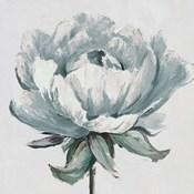 Gray Pretty Bloom