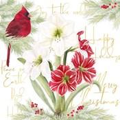 Merry Amaryllis II