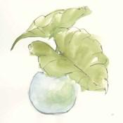 Plant Big Leaf III