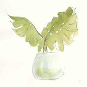 Plant Big Leaf II