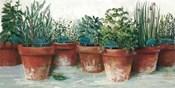 Pots of Herbs II White