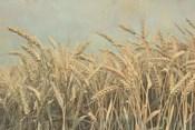 Gold Harvest Panel