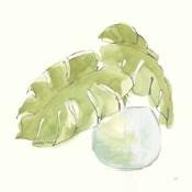 Plant Big Leaf IV
