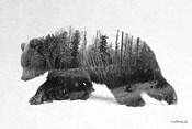 Black & White Bear