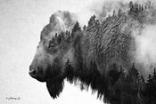 Black & White Bison