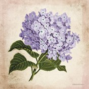 Vintage Lilac