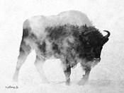 Black & White Buffalo