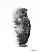 Black & White Owl