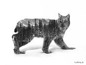 Black & White Bobcat