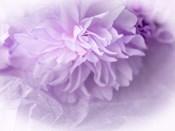 Dreamy Florals in Violet II