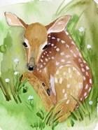 Baby Spring Animals I
