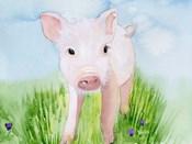 Baby Spring Animals V