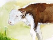 Baby Spring Animals VII