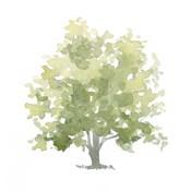 Lonely Oak II