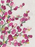 Spring Pinks II