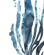 Inkwash Kelp IV