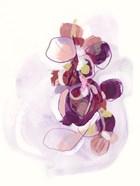 Orchid Sonata II