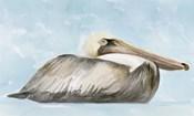 Soft Brown Pelican I
