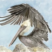 Soft Brown Pelican II