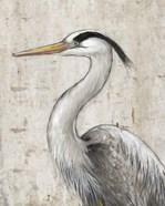 Grey Heron II