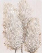 Pampas Grass IV