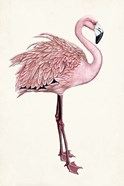 Striking Flamingo I