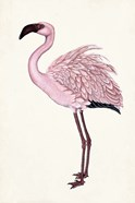 Striking Flamingo II