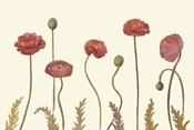 Coral Poppy Display I