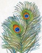 Vivid Peacock Feathers I