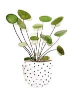 Plant in a Pot II