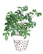 Plant in a Pot IV
