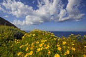 Europe, Greece, Santorini Wildflowers And Ocean Landscape