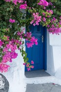 Greece, Santorini A Picturesque Blue Door Is Surrounded By Pink Bougainvillea In Firostefani
