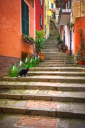Europe, Italy, Monterosso Cat On Long Stairway