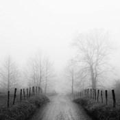 Sparks Lane in Fog